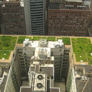 250px-20080708_Chicago_City_Hall_Green_Roof
